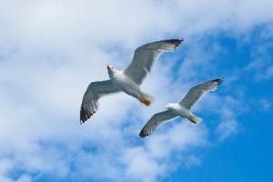 Bevlogenheid heeft vleugels nodig Ans Vermeulen Zin in Werk